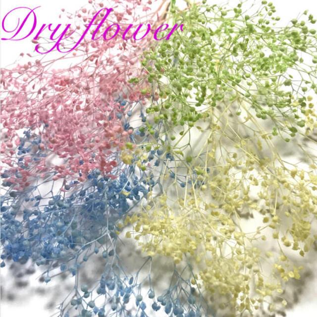 かすみ草 ドライフラワー 蕾〈定番4カラー〉 ハンドメイドのフラワー/ガーデン(ドライフラワー)の商品写真