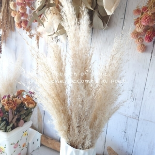 ꕤ今季収穫❣お試し3本セット ꕤお裾分けパンパスグラス3本セットꕤ(ドライフラワー)