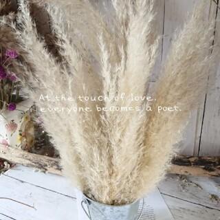 長さ茎付き✨今季収穫❣4本セット ꕤお裾分けパンパスグラス4本セット(ドライフラワー)