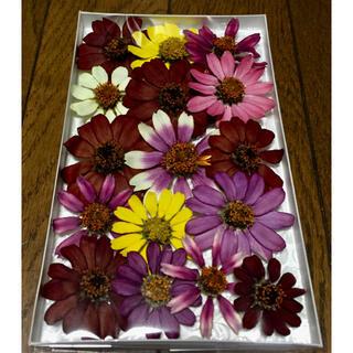 c④  銀の紫陽花が作った大人色ジニアのドライフラワー‼️(ドライフラワー)
