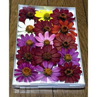 c③  銀の紫陽花が作った大人色ジニアのドライフラワー(ドライフラワー)