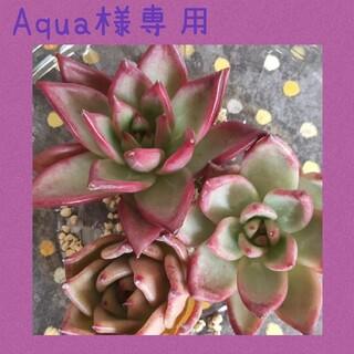 Aqua様専用(その他)