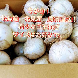 今が旬! 希少な白い玉ねぎ 北海道産 10kg  (野菜)