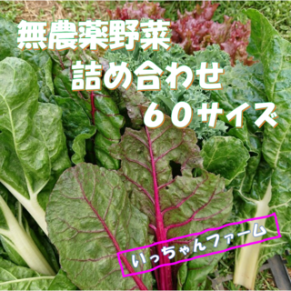 ゆきりん様専用 夏野菜の詰め合わせ 60サイズにて(野菜)