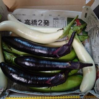 カラフルなす10本入り無農薬栽培福島県産(野菜)