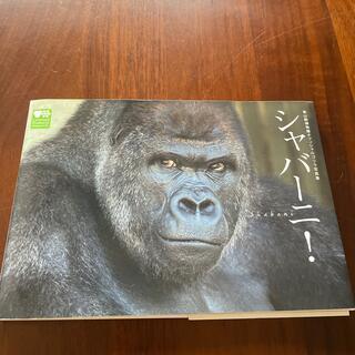 シャバーニ 東山動物園オフィシャルゴリラ写真集(その他)
