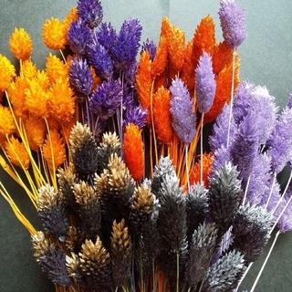 ポアプランツ 6色 12本 ハロウィーンカラー ハーバリウム花材 アレンジメント(ドライフラワー)