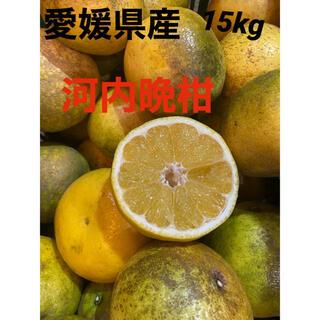 愛媛県産 河内晩柑15kg(フルーツ)