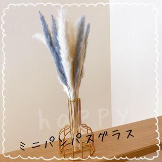 パンパスグラス ドライフラワー テールリード 20本セット【ミニ】(ドライフラワー)