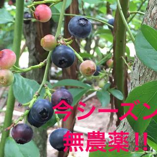 冷凍ブルーベリー 1Kg(フルーツ)