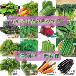 野菜種☆パプリカ☆変更→芽キャベツ ほうれん草 つるなしいんげん ビタミン菜(野菜)