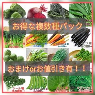 野菜種☆パプリカ ケール わさび菜 つるむらさき 春菊☆変更→芽キャベツ(野菜)