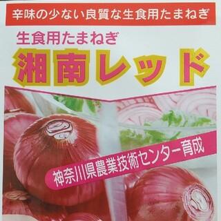 野菜の種       湘南レッド(野菜)