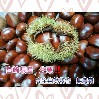 宮崎県産 生栗 500g 完全自然栽培 無農薬(フルーツ)
