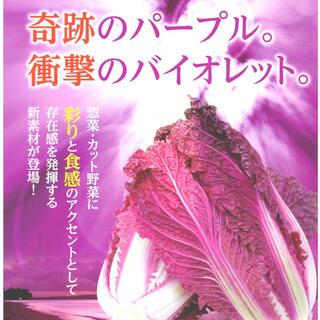 野菜種 新発売 紫そらし 紫白菜 野菜種6粒(野菜)