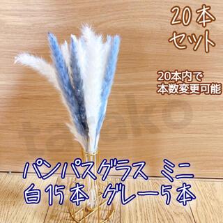 パンパスグラス ミニ ドライフラワー テールリード 白15本 グレー5本(ドライフラワー)
