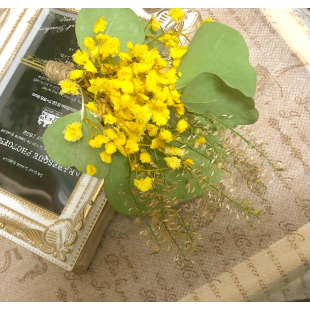 ナチュラルドライフラワー 0825-1 ユーカリポポラスとかすみ草のミニスワッグ ハンドメイドのフラワー/ガーデン(ドライフラワー)の商品写真
