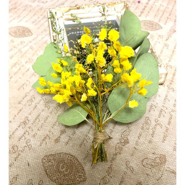 ナチュラルドライフラワー 0825-2 ユーカリポポラスとかすみ草のミニスワッグ ハンドメイドのフラワー/ガーデン(ドライフラワー)の商品写真