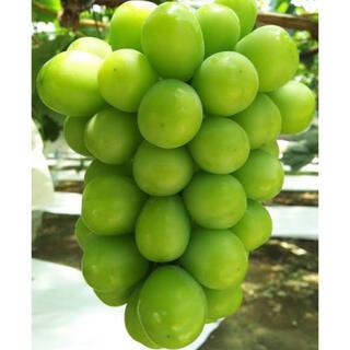 シャインマスカット 山梨県産 1キロ 粒(フルーツ)