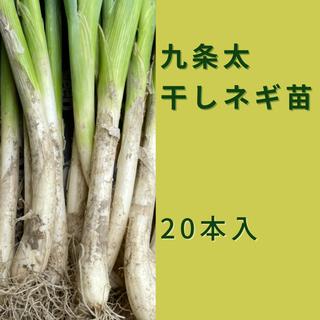 今が旬‼️九条ネギ苗❗️(野菜)
