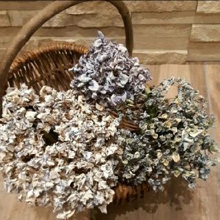 くしゅくしゅ紫陽花ドライフラワー 自然色 ハイドランジア等 大きめ2本+1本(ドライフラワー)