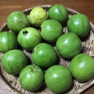 無農薬栽培   白グァバ(フルーツ)