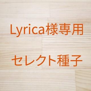 Lyrica様専用 セレクト種子 4袋(野菜)