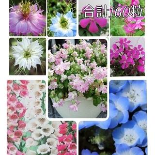 🌺花の種 シレネ 2種 ジキタリス ネモフィラ ニゲラ(プランター)