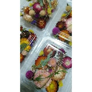 4パック999円 ドライフラワー 貝殻草 千日紅 スターチスなど  花材(各種パーツ)
