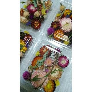 1パック300円 ドライフラワー 貝殻草 千日紅 スターチスなど  花材(ドライフラワー)