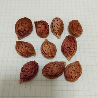 桃の種 種子 10個(その他)