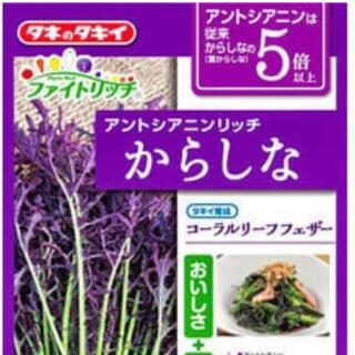 アントシアニンリッチ からしな 野菜種 30粒(野菜)