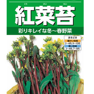 野菜種 紅菜苔 彩リキレイな冬~春野菜種 30粒(野菜)