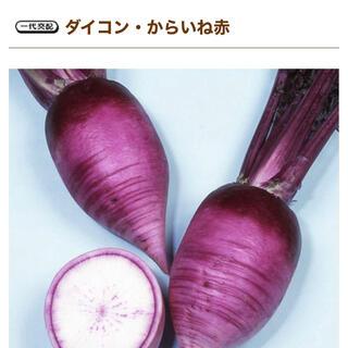 健康野菜 ミニ大根 からいね赤 野菜種 15粒(野菜)