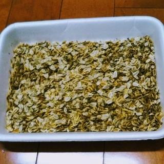 伊豆大島産 赤茎 明日葉アシタバの種100粒(その他)