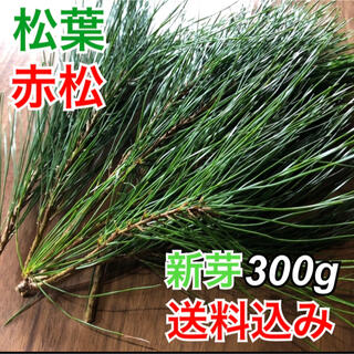 【松葉】新芽300g 松葉茶 健康茶 サイダーにも 産地直送 松茸の生える岩手県(茶)