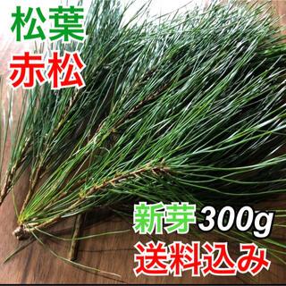 【松葉】新芽300g 松葉茶 健康茶 サイダーにも産地直送 松茸の生える岩手県産(健康茶)