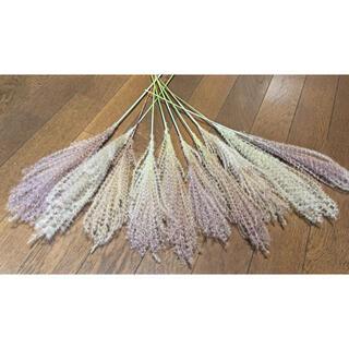 銀の紫陽花が作った作った赤城山麓のススキは美しい象牙色‼️⑦(ドライフラワー)