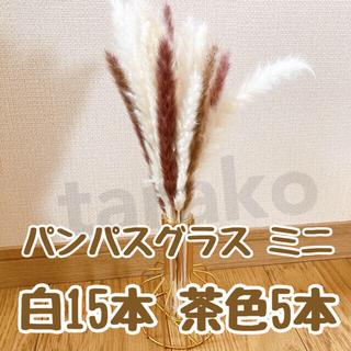 パンパスグラス ミニ ドライフラワー テールリード 白15本 茶色5本(ドライフラワー)