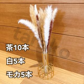 パンパスグラス ミニ ドライフラワー テールリード 茶色10本 白5本 モカ5本(ドライフラワー)