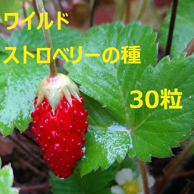 無農薬栽培 ワイルドストロベリーの種 30粒 食品/飲料/酒の食品(野菜)の商品写真