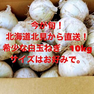 今が収穫期!北海道から希少な白玉ねぎ 10kg (野菜)