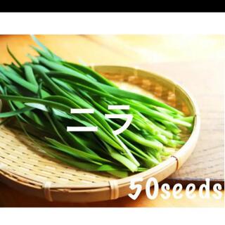 まき時! ニラ ドドーンっと! 種50粒!(野菜)