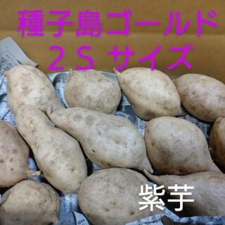 種子島ゴールド 2S 2キロ(野菜)