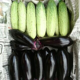 茄子 昔きゅうり 詰め合わせ(野菜)