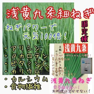 浅黄九条細ねぎ 固定種 家庭菜園 野菜の種 種子 種 コンパニオンプランツ(野菜)