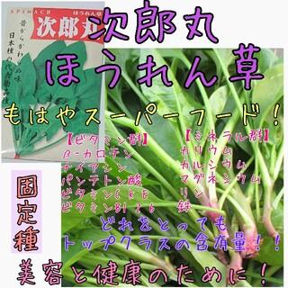 次郎丸ほうれん草 固定種 家庭菜園 種子 種 野菜の種 スーパーフード(野菜)