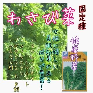 わさび菜 固定種 野菜の種 ハーブの種 水耕栽培 家庭菜園 種子 種(野菜)