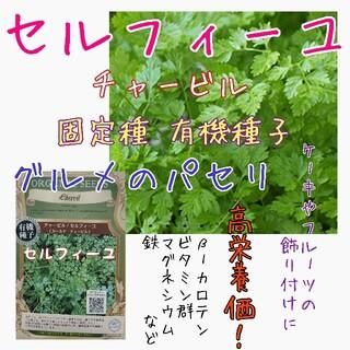 セルフィーユ チャービル 固定種 家庭菜園 水耕栽培 野菜の種 ハーブの種(野菜)