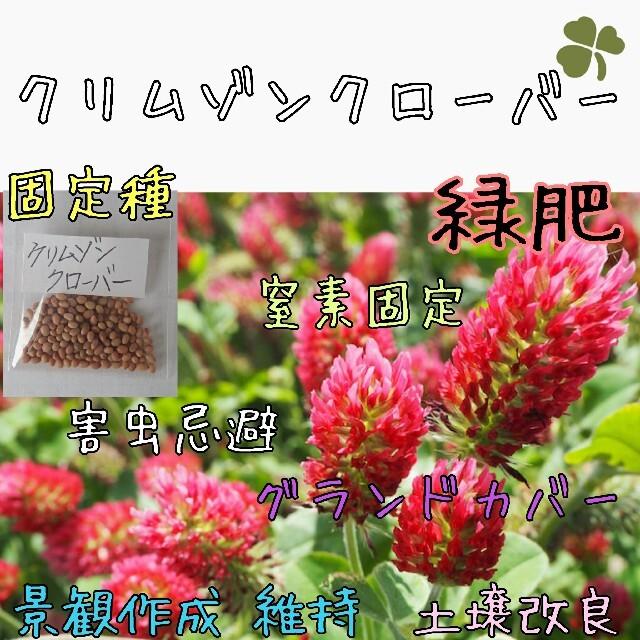 クリムゾンクローバー 緑肥 固定種 家庭菜園 種子 種 グランドカバー 食品/飲料/酒の食品(野菜)の商品写真